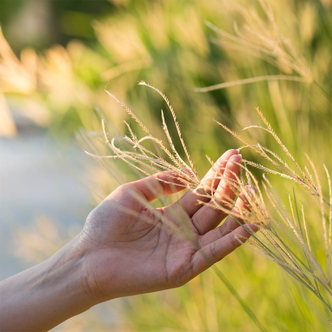 Healing hands touching long grasses in nature